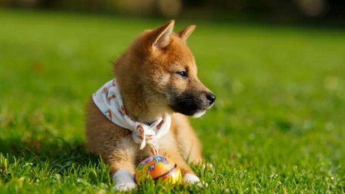 Илон Маск хочет, чтобы Coinbase стала дружественной к DOGE