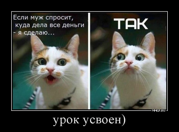 фото кошки куда деньги дела рулет дрожжевого